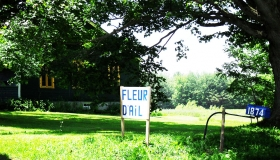 fleur_d'ail